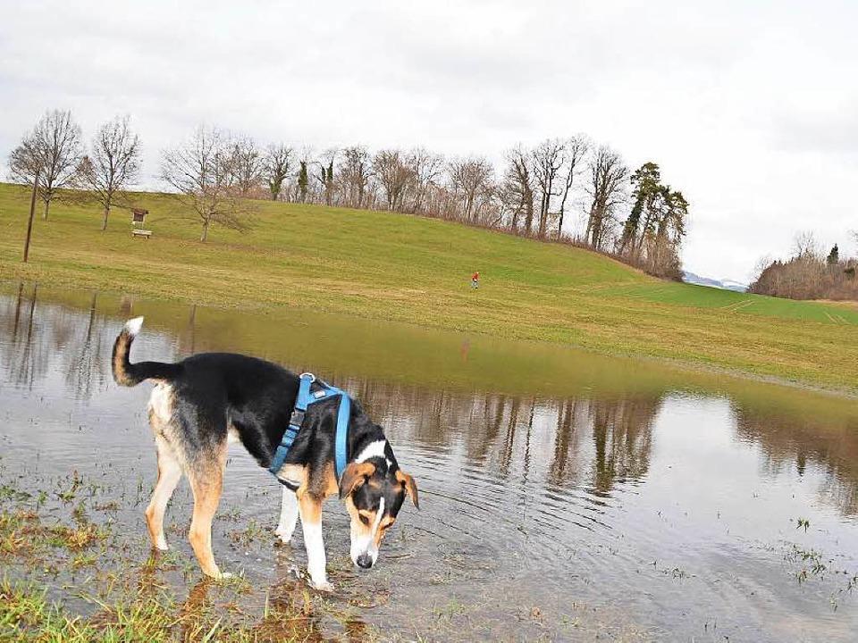 Ein harter Hund muss man sein, um mit ... sich eher zaghaft an der Oberfläche.   | Foto: Angelika Schmidt