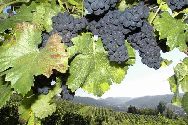 Werben für den Wein aus dem Breisgau