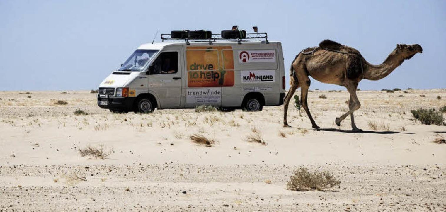 Wüste-Begegnung in der Sahara: Drive t...s, hat hier also vermutlich Vorfahrt.   | Foto: privat