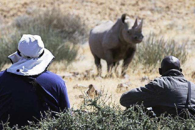Auf den Spuren der Nashörner im Desert Rhino Camp