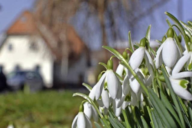 Frühlingsboten im Februar