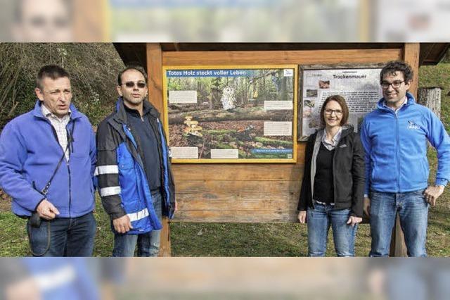 Informationen über das Totholz