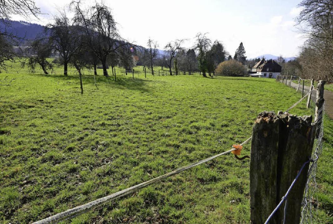 """Seit Jahrzehnten umstritten: die """"Höhe"""" in Zähringen     Foto: Ingo Schneider"""