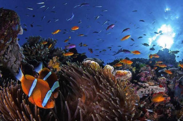 Neues Leben im Riff ist möglich