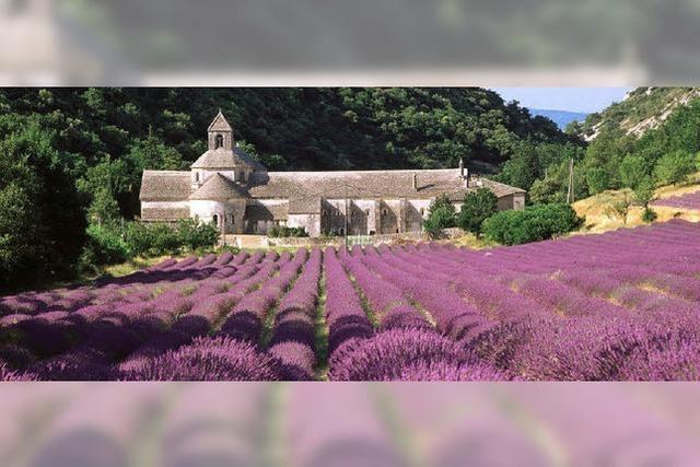 Sehnsucht nach dem Duft der Provence