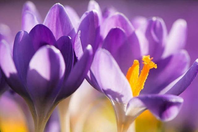Für Meteorologen beginnt am 1. März der Frühling