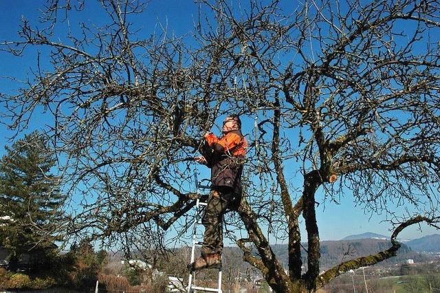 Der richtige Schnitt nutzt dem Baum