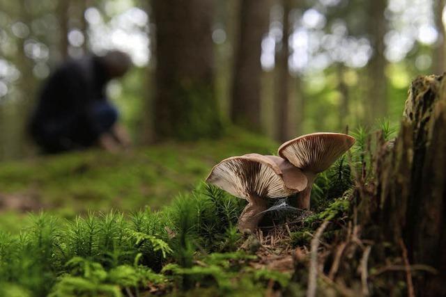Im Wald stehen die falschen Bäume