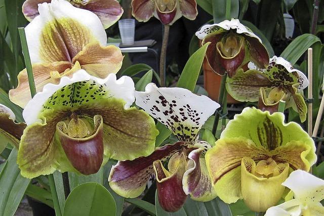 Exotische Pflanzenschönheiten