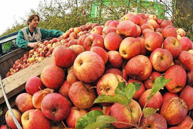 Badens Bauern rügen die Sanktionen gegen Russland