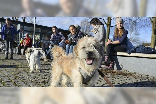 Hund und Herrchen lernen gemeinsam