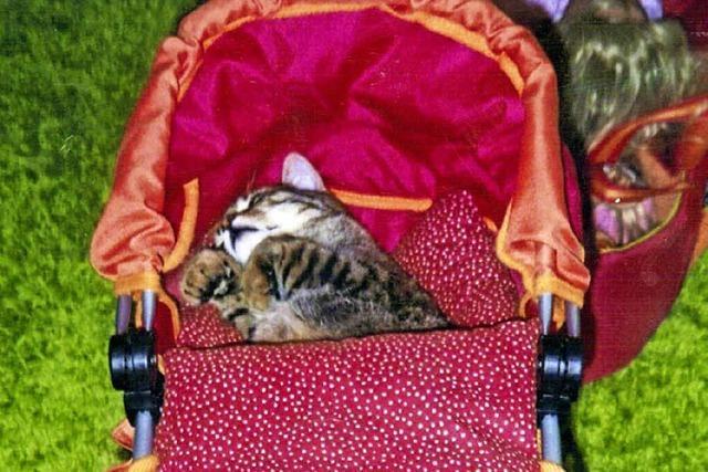 Sein Lieblingsplatz ist im Puppenwagen