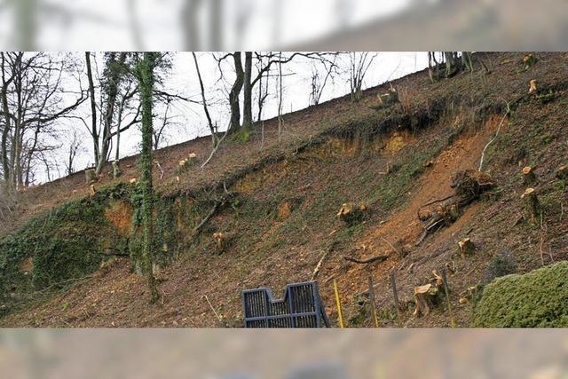 Morsche Bäume aus Sicherheitsgründen gefällt