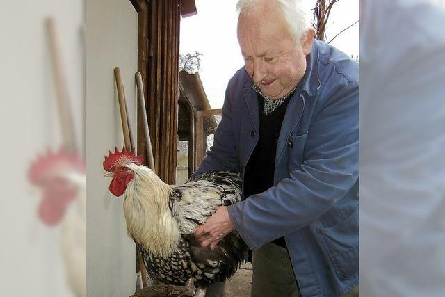 Tierisch: Hahn aus Wehr sprengt Normalmaß