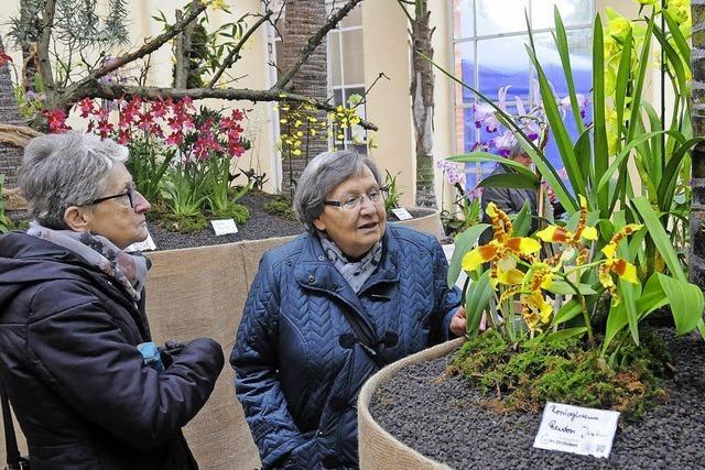 Orchideenausstellung im Stadtpark