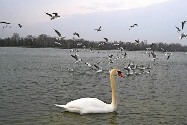 Getümmel auf dem Rhein