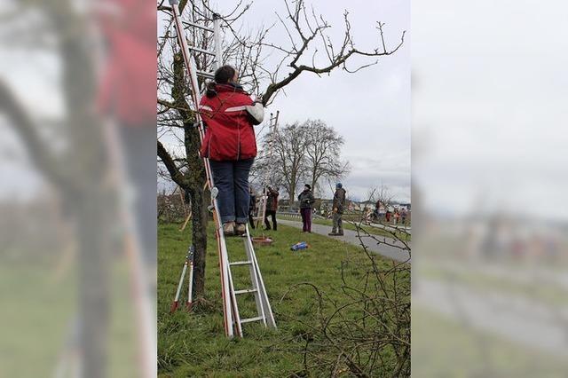 Teilnehmerrekord beim Landschaftspflegetag