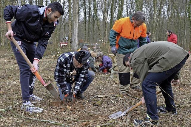 1200 Bäume gepflanzt und eingepackt