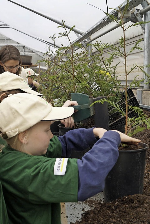 Kinder der Europa-Minigärtner-Regional...packten beim Umtopfen junger Bäume an.  | Foto: Silke Hartenstein