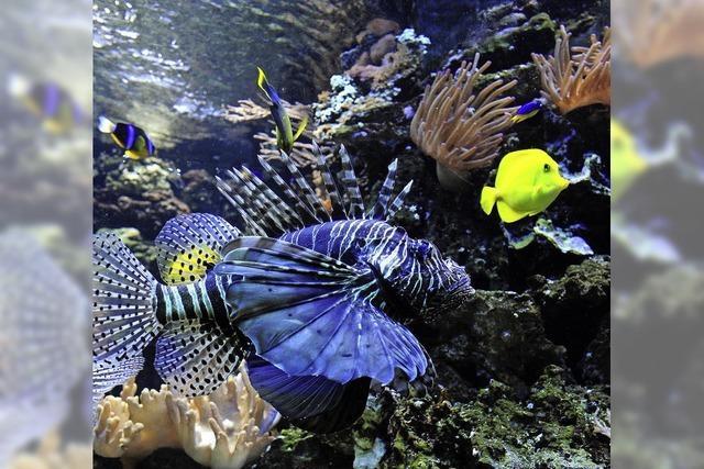 Die Aquarienfreunde laden zur