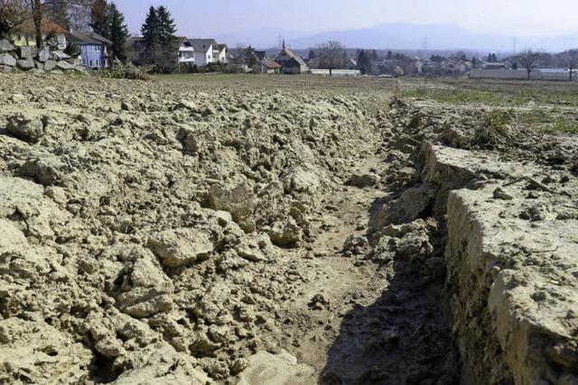 Neubaugebiet in Tiengen: Hier haben vor 3000 Jahren schon Menschen gewohnt