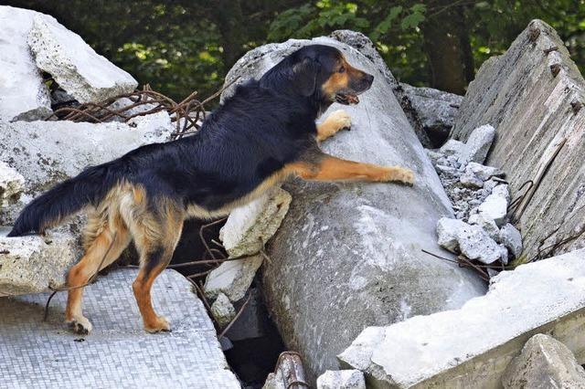 2015 mussten Rettungshunde 35-mal Vermisste suchen