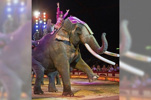 Bundesrat für Wildtierverbot
