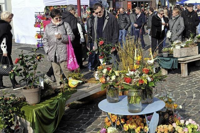 Die Blüten locken die Besucher an