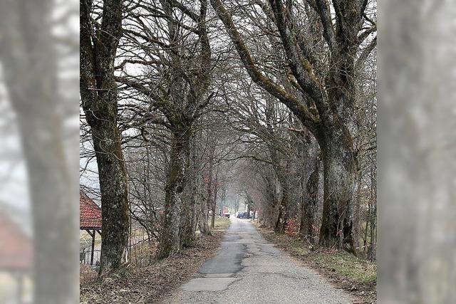 Aufwertung für Allee in Hottingen