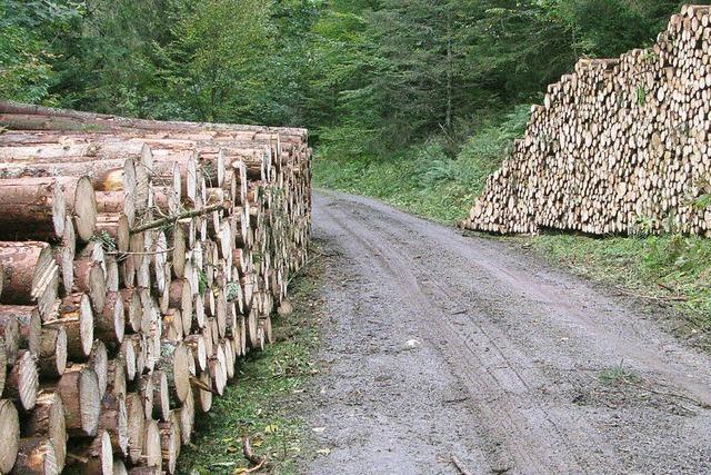 Wald bringt einen Gewinn