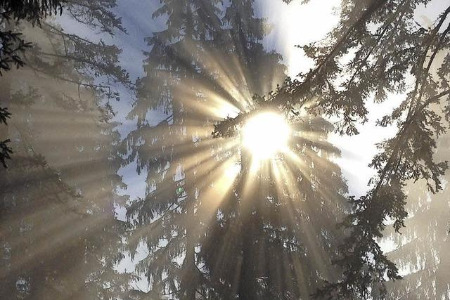 Alte Bäume zum Schutz der jüngeren