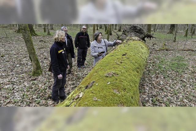 Warum ein Eichenwald im Mooswald vor 25 Jahren sich selbst überlassen wurde
