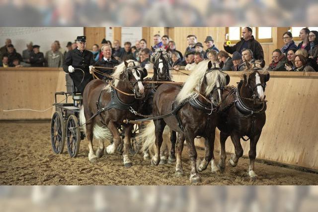 Pferdezüchter arbeiten erfolgreich