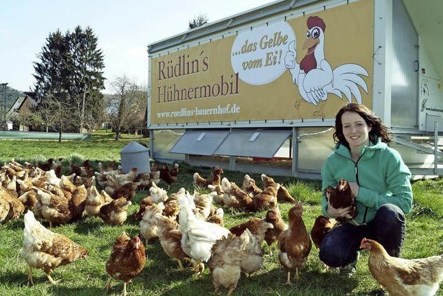 Ein Hühnerleben wie aus dem Bilderbuch – aber in Wirklichkeit