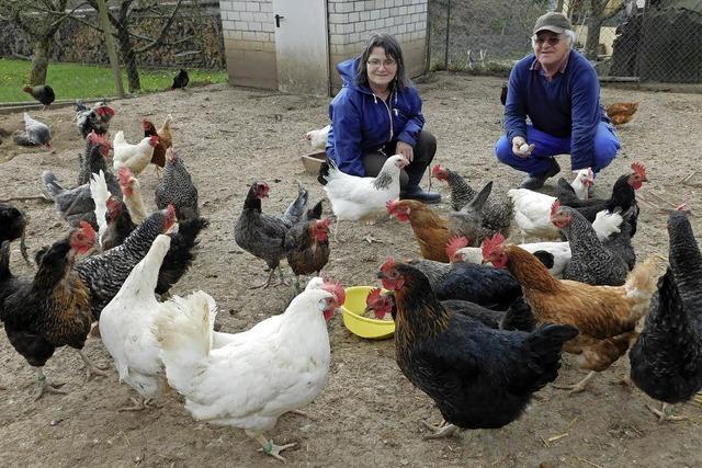 Viele Kunden schätzen die grünen Eier