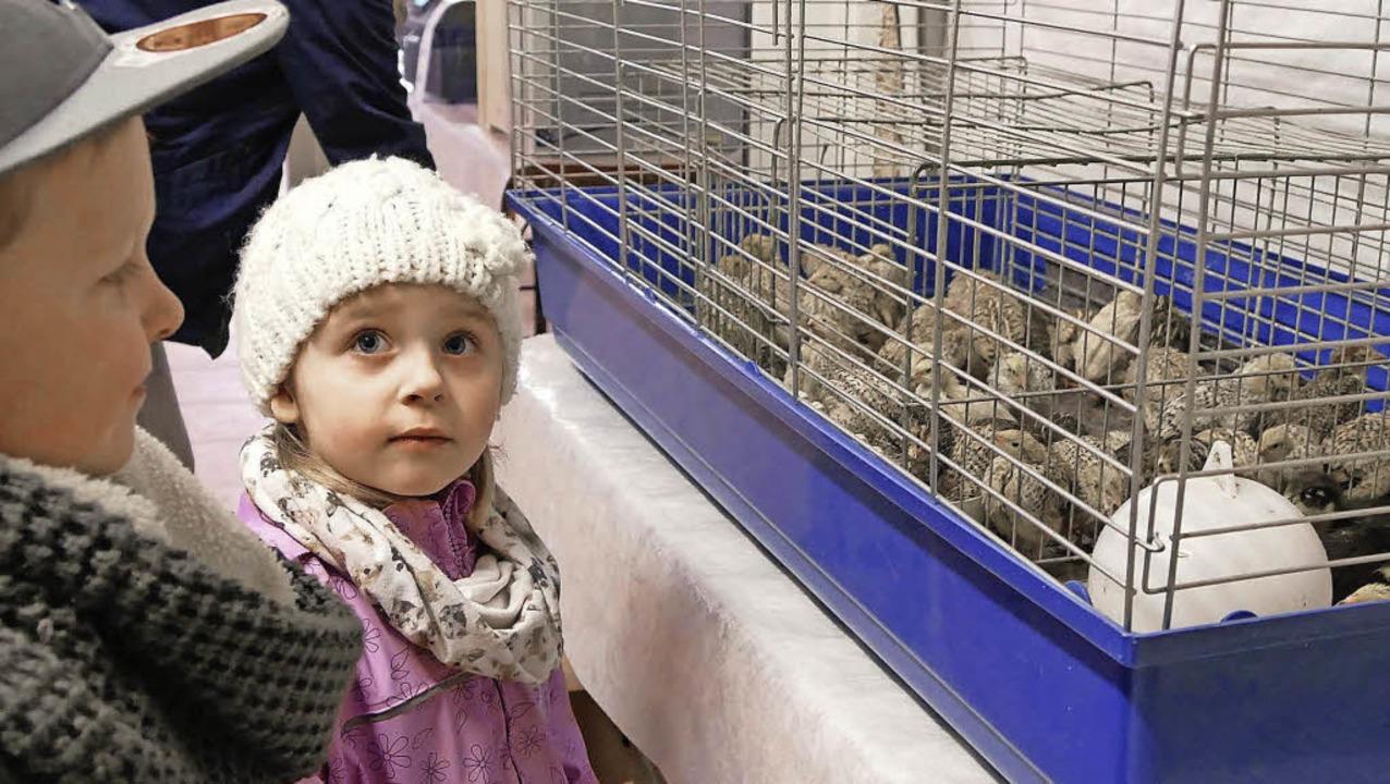 Kleine Hühner und  große Kinderaugen b...arkt des Kleintierzuchtvereins  C 201   | Foto: Michael Sesiani