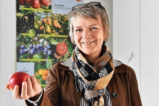 Wie eine Freiburger Firma den perfekten Apfel finden will