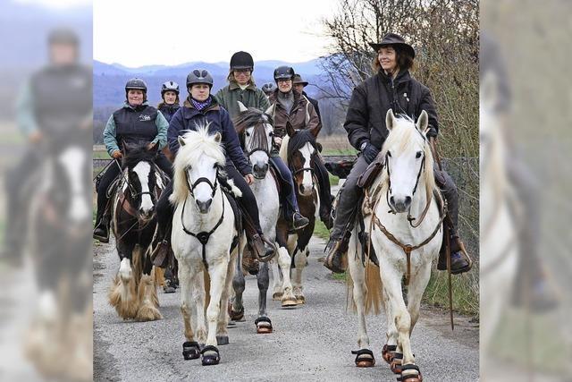 Gute Bedingungen für Reiter und Pferd