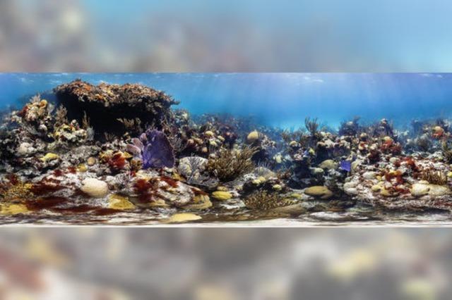 Gesunde Korallen nur an vier Stellen