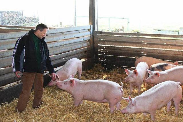 Willstätter Landwirt will, dass es seine Schweine besser haben