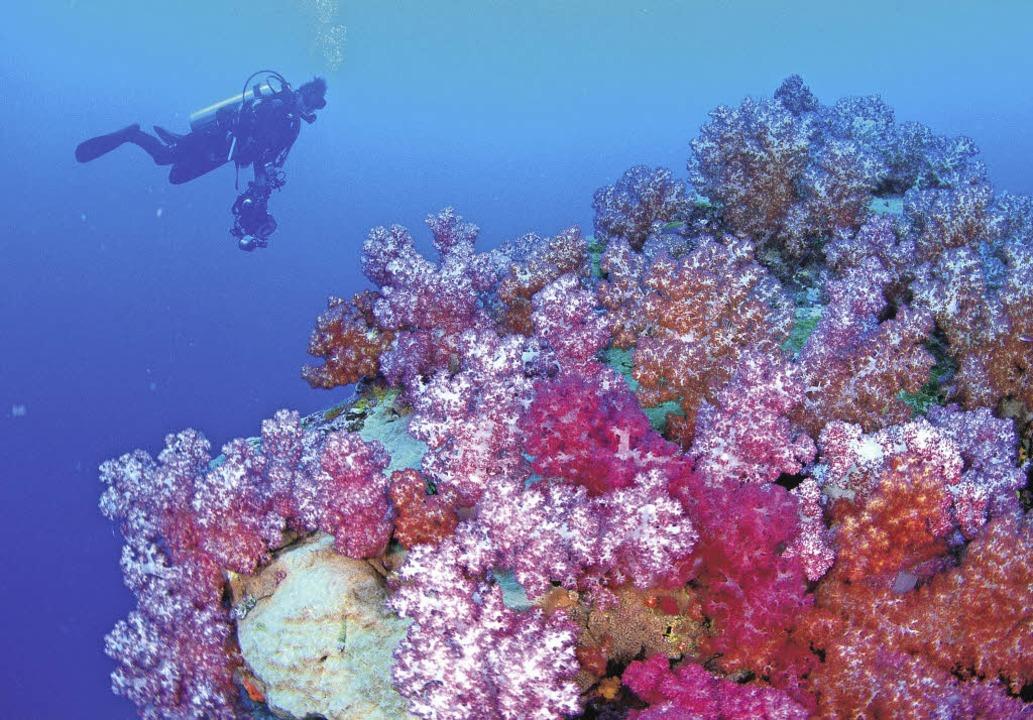 Bunte Unterwasserwelt: ein Taucher am Riff  | Foto: Tourism Western Australia