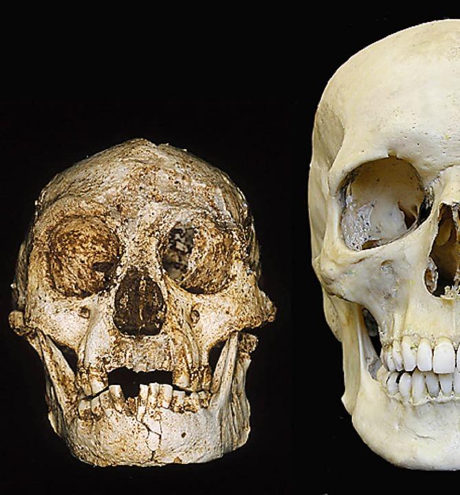 Der Hobbit-Schädel ist deutlich kleiner als der heutiger Menschen.    Foto: Peter Brown