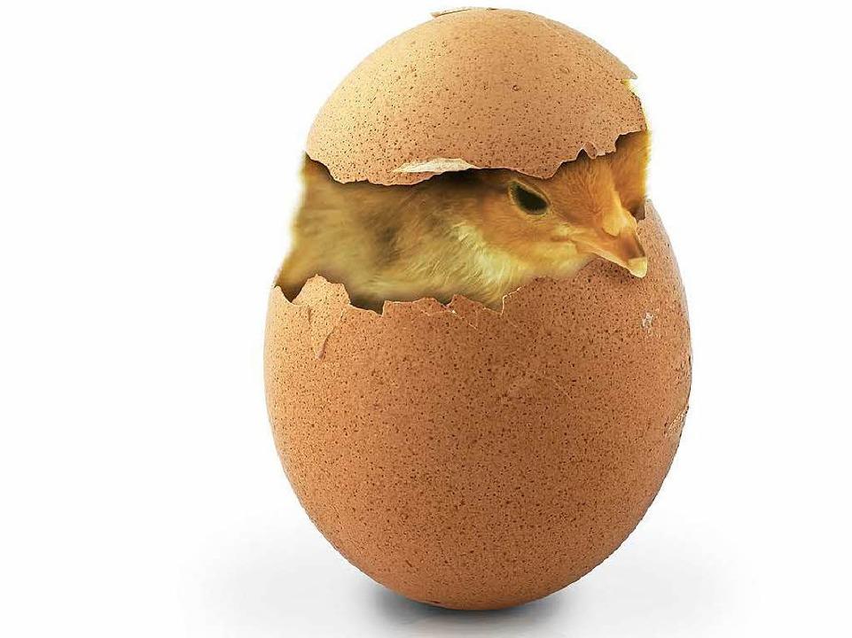Küken Aus Dem Ei