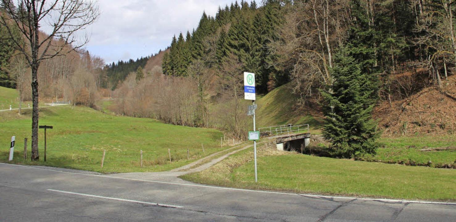 Durch einen Weg soll der Waldbereich b...sburg nach Marzell erschlossen werden.  | Foto: Rolf-Dieter Kanmacher