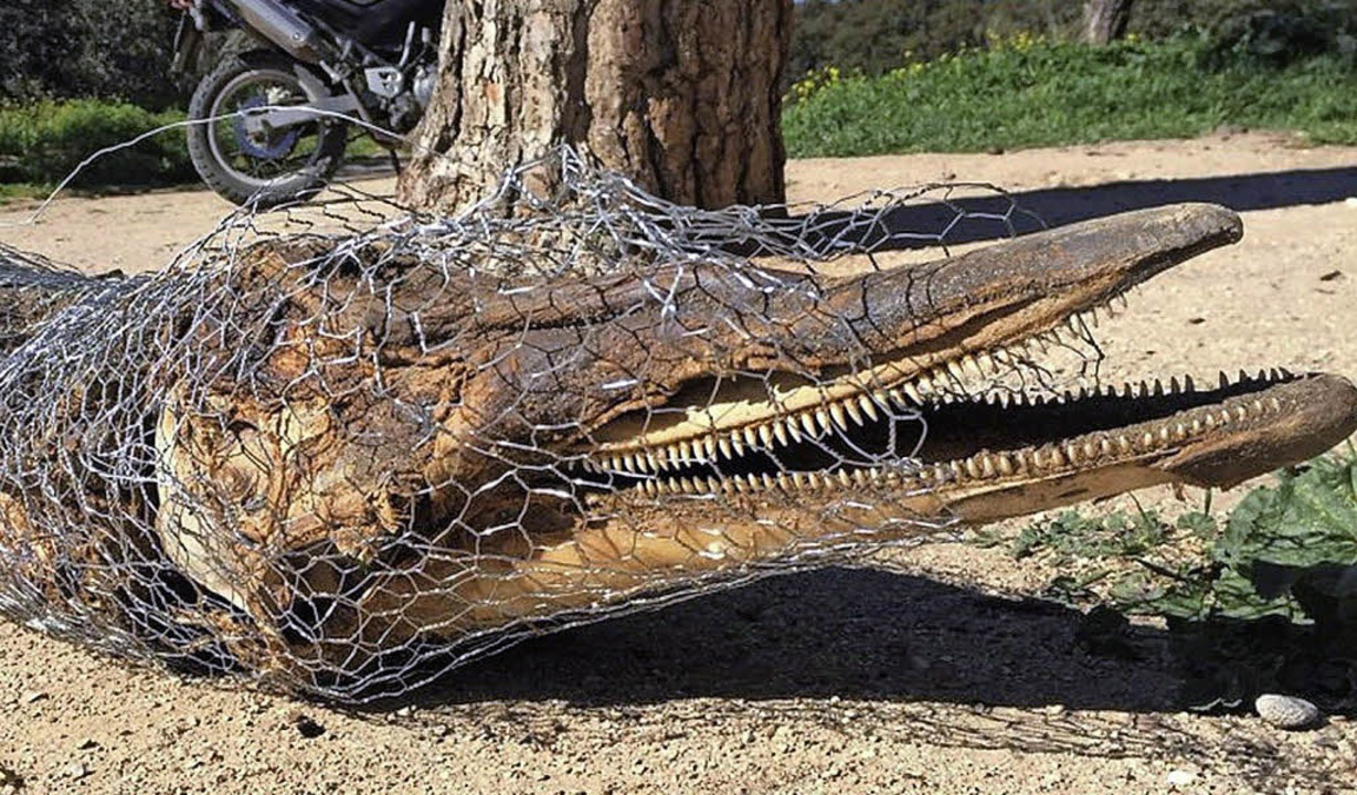 Die Überreste des Delfins, wie er in Madrid gefunden wurde.     Foto: dpa