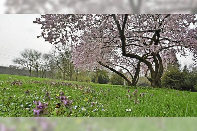 Frühling im Grüttpark