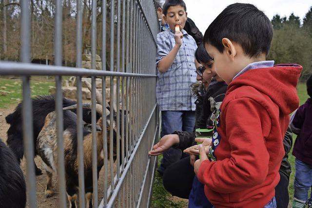 Tiere faszinieren die Kinder