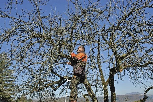 Schnitte sichern Bäumen das Leben