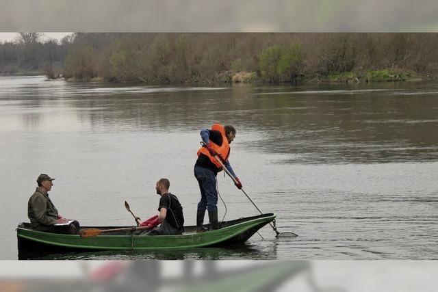 Angelvereine schützen den Fischnachwuchs