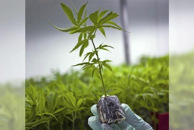Urteil: Schwerkranker darf Cannabis daheim anbauen